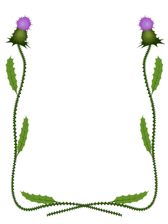 thistle plant: vector thistle frame pattern isolated on white Illustration