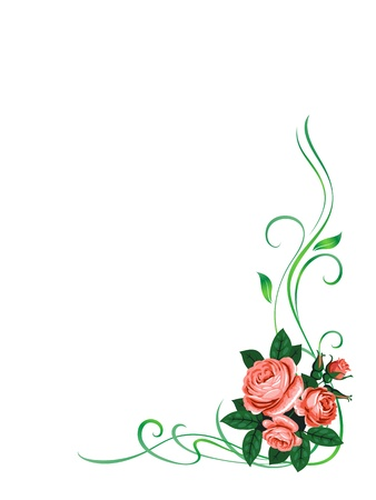 roses pattern: vector roses frame pattern background decoration isolated