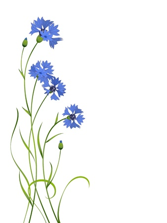 blue cornflower flower bouquet illustration pattern isolated