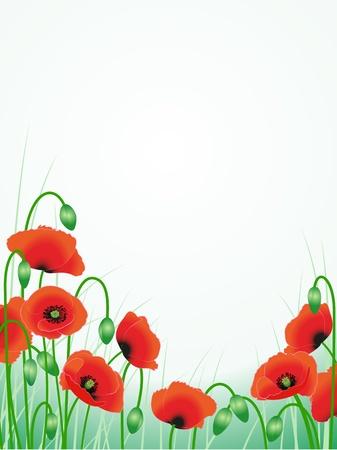 poppy field: amapolas rojas patr�n floral ilustraci�n de fondo Vectores