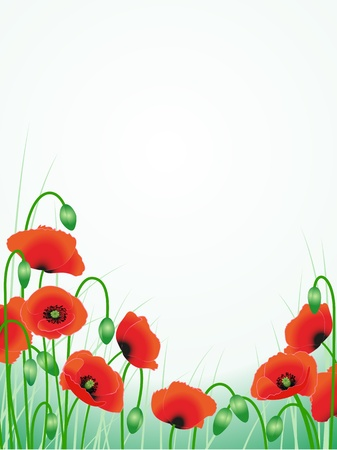 red poppies floral background illustration pattern Vector