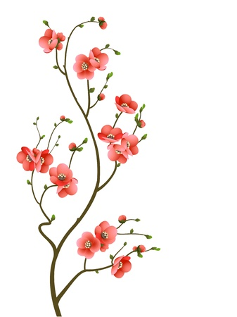 abstract background with cherry blossom branch isolated