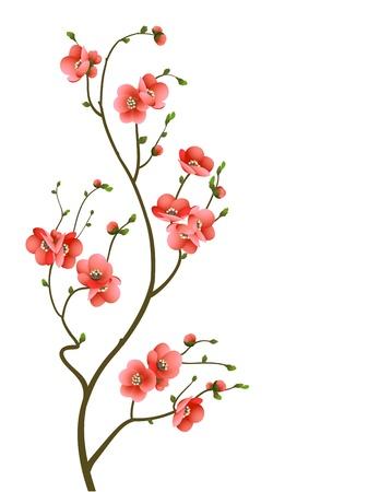 kersenboom: abstracte achtergrond met kersenbloesem tak geïsoleerd Stock Illustratie
