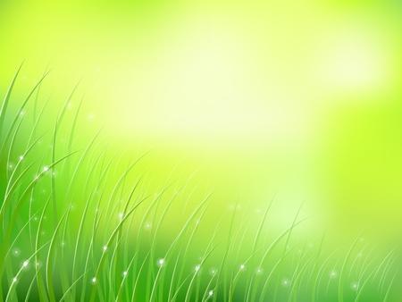 ochtend dauw: ochtend zonlicht gras met vroege dauw softfocus bokeh patroon
