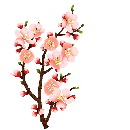 abstract background with cherry blossom branch isolated Stock Vector - 17476192