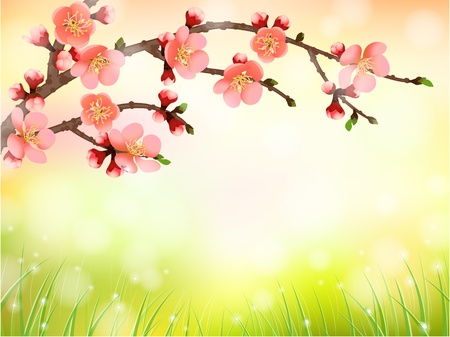 japanese garden: Sakura, cherry blossom in morning light, pattern background Illustration