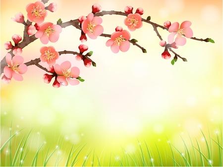 ochtend dauw: Sakura, kersenbloesem in de ochtend licht, patroon achtergrond Stock Illustratie
