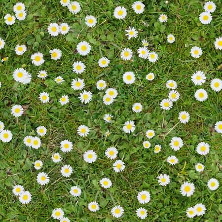 White flowers on the lawn top view seamless texture background stock stock photo white flowers on the lawn top view seamless texture background mightylinksfo