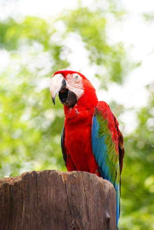 Colourful Parrot photo