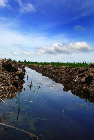 Paddy fields, Sekinchan Stock Photo