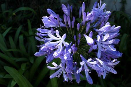 Een bloem in een Costaricaanse tuin Stockfoto