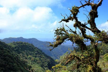 vue: Vue in monteverde Stock Photo