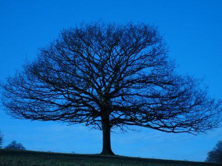 chatsworth: The Tree Stock Photo