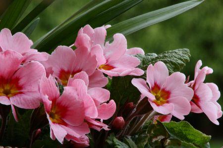 flowery: Floridos