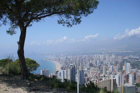 A Tree on a Hill Zdjęcie Seryjne