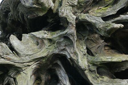 Tree Chunk photo