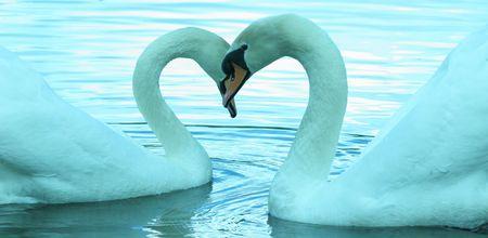 ondulation: Necker Swan's  Banque d'images