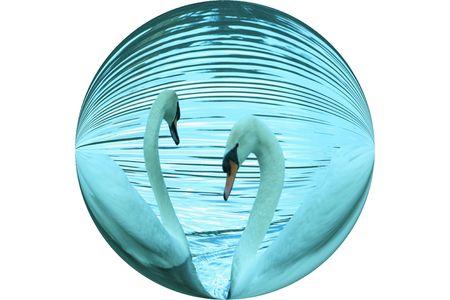 Swan's Swimming Round Stock Photo - 479098