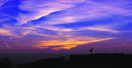 chesterfield: Daybreak Bird