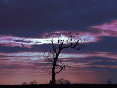 woodland sculpture: Tree Silhouette                Stock Photo