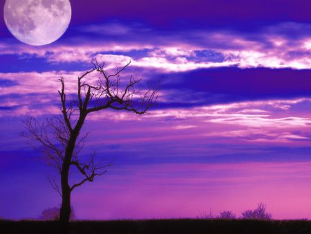 Tree Shape Moon Stock Photo - 811940