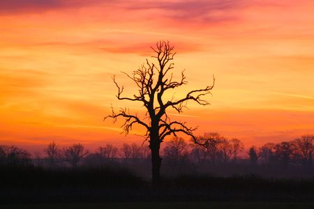 conceive: Sunrise Tree Stock Photo