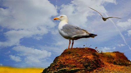 Gull view photo