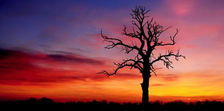 Old Tree Silhouette Stock Photo - 1877549