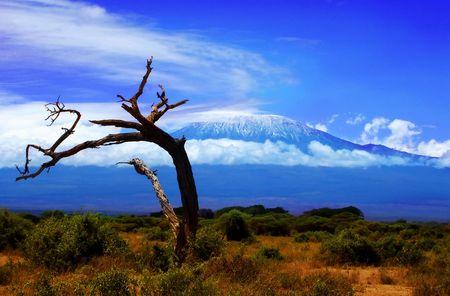 Kilimanjaro Tree View Stock Photo - 2053675