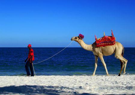 ondulation: Un chameau sur la plage