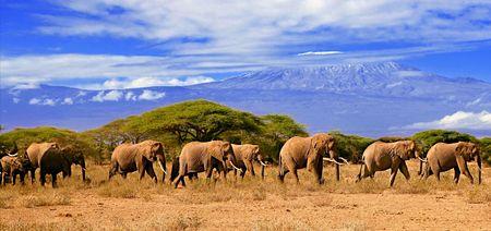 Kilimanjaro con elefanti