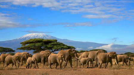 elefanten: Kilimanjaro mit Elefanten-Herde