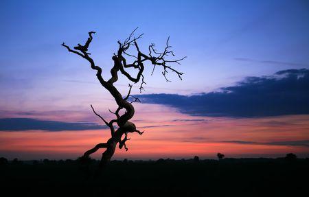 illustrates: Morning Tree