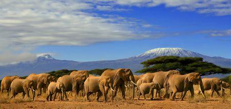 Kilimanjaro ed elefanti Archivio Fotografico - 3797494