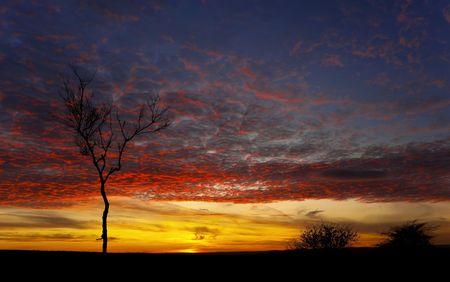 derbyshire: Sunset Tree Derbyshire Stock Photo