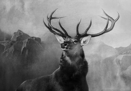 Head Deer In Black And White