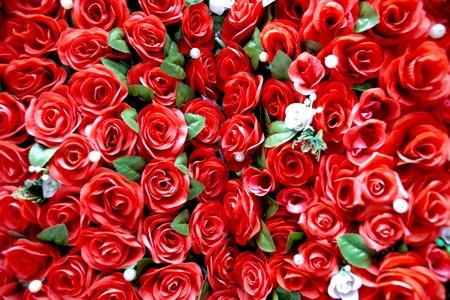rosas rojas: Red Roses