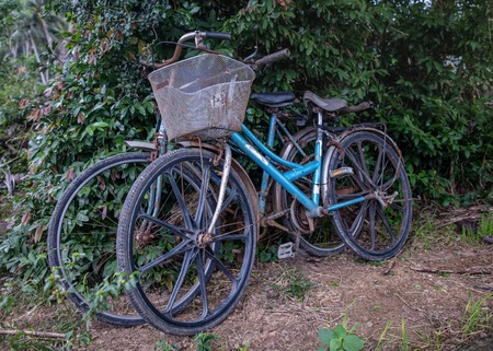 propelled: Two old rusty bicycles parked by a bushy hedgerow in Vietnam. Stock Photo