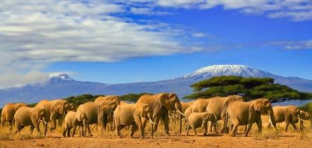 Elefantes africanos em uma viagem de safári ao Quênia e uma montanha de Kilimanjaro coberta de neve na Tanzânia ao fundo, sob um céu azul nublado.