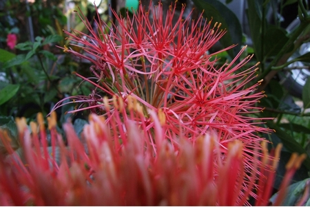 red flora photo