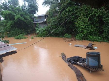 swampland: Environmental Pollution,Flood Natural