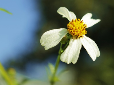 background: close up white small flower