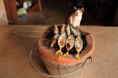 Cat grill fish photo