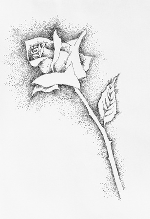 a technical drawing of rose in pen & ink photo