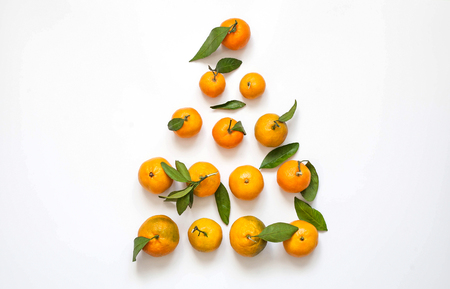Christmas card. Tree of Mandarin.