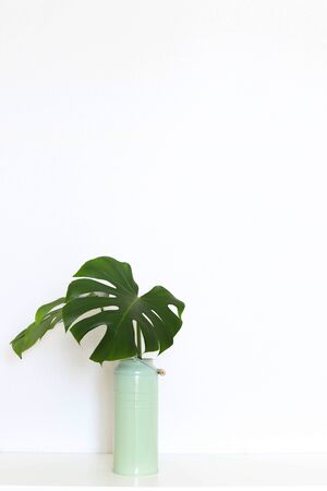 Interior with monstera leaves against a white wall, minimalism copyspace. 版權商用圖片