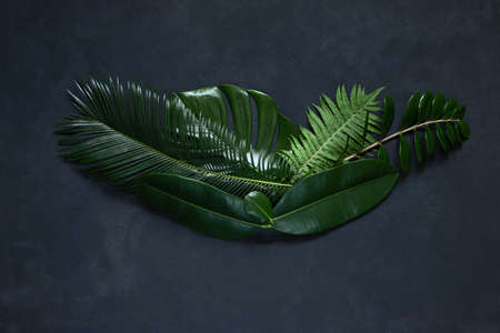 Tropical leaves on a black background monstera, ficus, palm, zamiokulkas. On a yellow or black background. Top view.