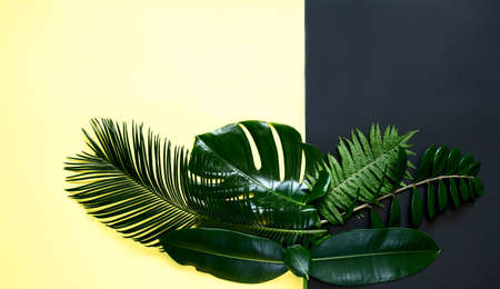 Tropical leaves on a yellow black background monstera, ficus, palm, zamiokulkas. On a yellow or black background. Top view.