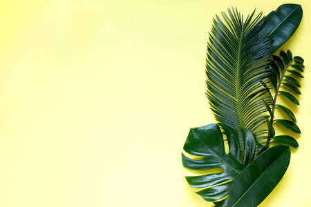 Tropical leaves on a yellow background monstera, ficus, palm, zamiokulkas. On a yellow or black background. Top view.