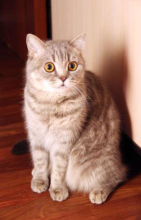 pussycat: pussycat Stock Photo